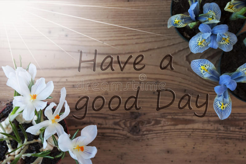 Sunny Crocus And Hyacinth citationstecken har en bra dag royaltyfria bilder