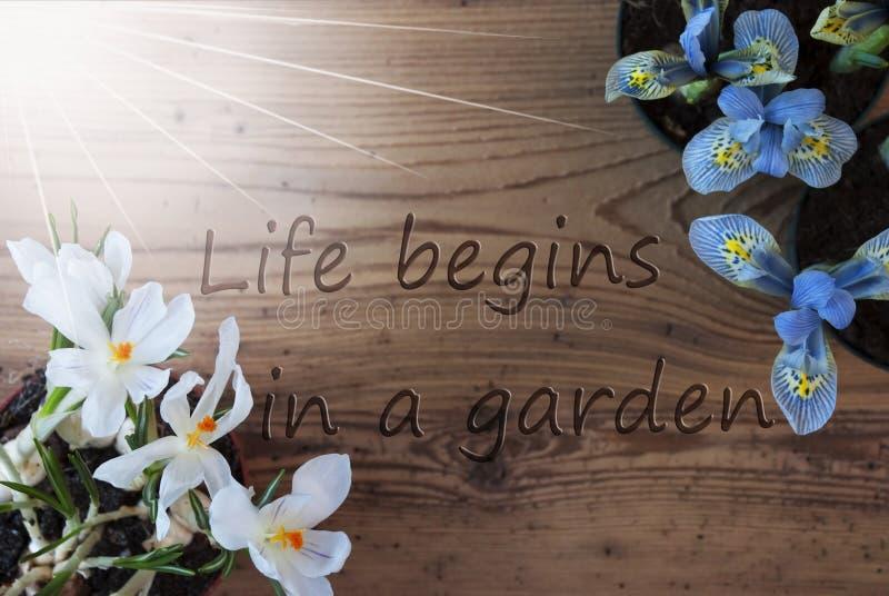 Sunny Crocus And Hyacinth citationsteckenliv börjar i en trädgård royaltyfri bild