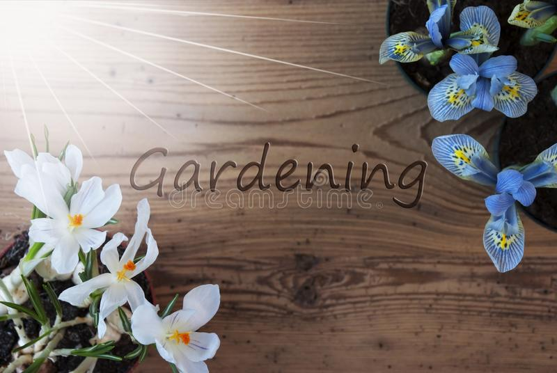 Sunny Crocus And Hyacinth, text som arbeta i trädgården, träbakgrund royaltyfri bild