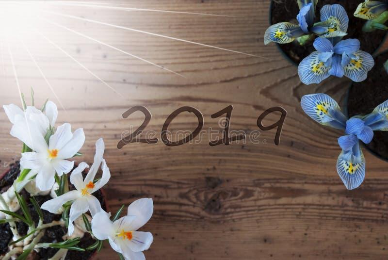 Sunny Crocus And Hyacinth text 2019, träbakgrund arkivbilder