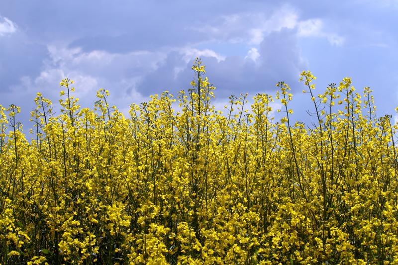 Download Sunny day stock photo. Image of crop, countryside, germany - 5139388