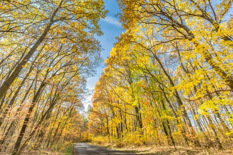 Autumn landscape with road and beautiful colored trees royalty free stock photos