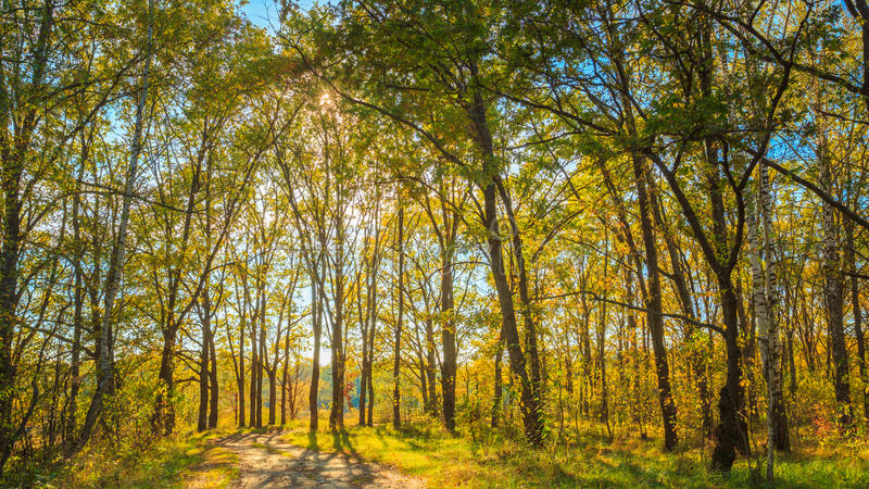 Sunny Day In Autumn Sunny Forest Trees, grün lizenzfreies stockbild