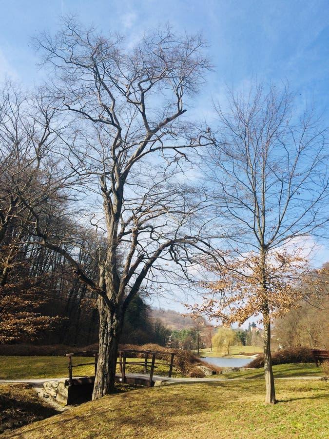 Beautiful & x22;Mestni park& x22; in Maribor, Slovenia. Sunny day in city park & x22;Mestni park& x22; in Maribor royalty free stock photo