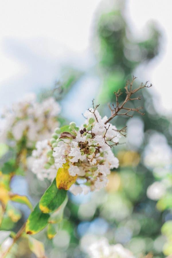 Sunny Day Flower Fields lizenzfreie stockbilder