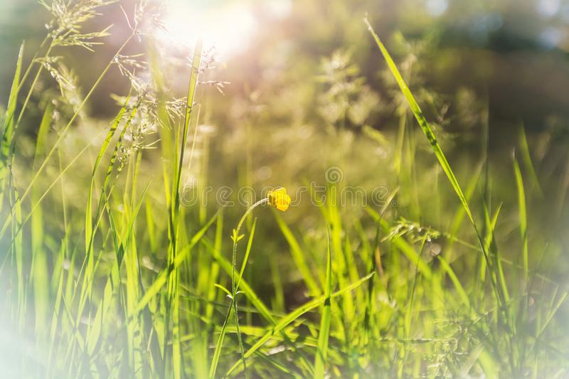 Sunny meadow stock photography