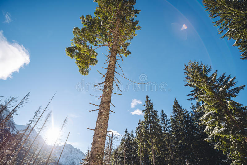 Sunny day in High Tatra Mountains royalty free stock image