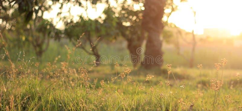 Sunny Day im Park lizenzfreie stockfotografie