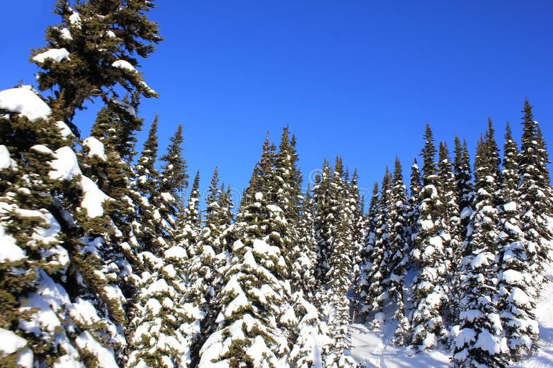 Sunny day in a winterwonderland in beautiful whistler in canada, british columbia stock photography