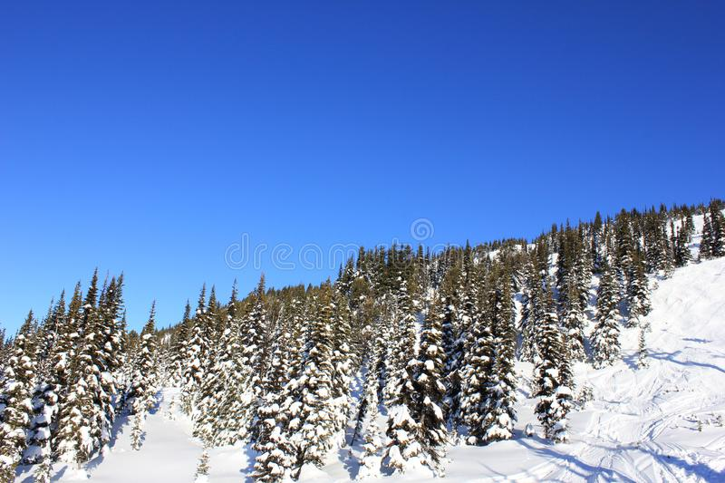 Sunny day in a winterwonderland in beautiful whistler in canada, british columbia royalty free stock image