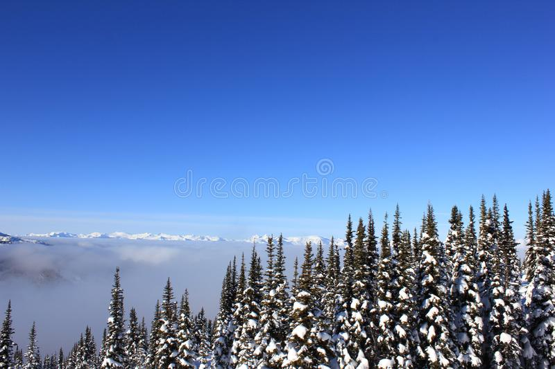 Sunny day in a winterwonderland in beautiful whistler in canada, british columbia. With a snowy forest an blue sky royalty free stock photo