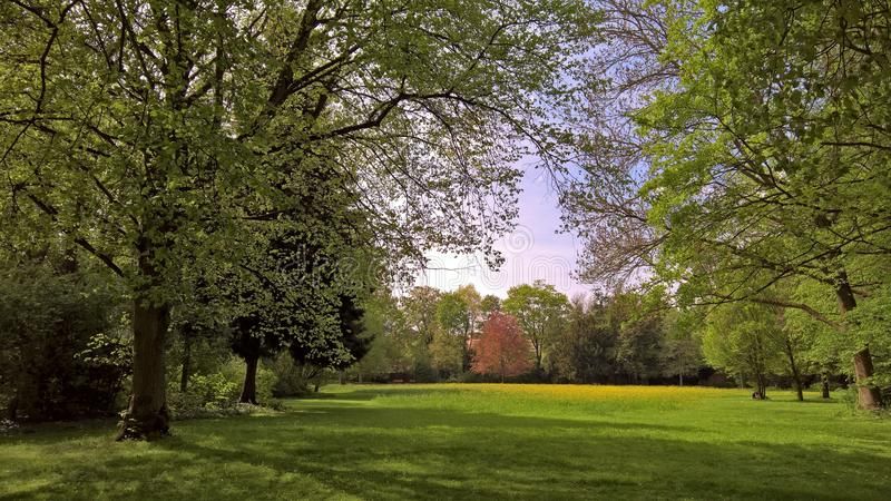 Sunny day in the old park of the city of ansbach. Forest. meadow. trees. silence. the sun. grass. leaves. flowers. spring. Germany. Bavaria. silence. park in the stock photography