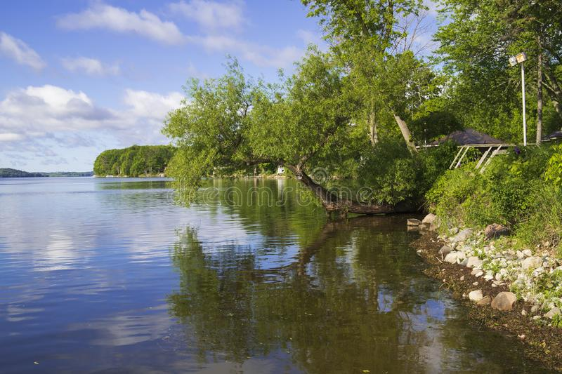 Sunny day at the lake. Sunny day in rice lake, Ontario Canada. rock, grass and tree reflection on clear water royalty free stock images