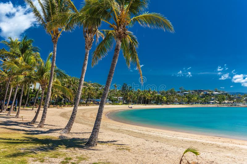 Sunny day on sandy beach with palm trees, Airlie Beach, Whitsundays, Queensland Australia. Sunny hot day on sandy beach with palm trees, Airlie Beach stock photo