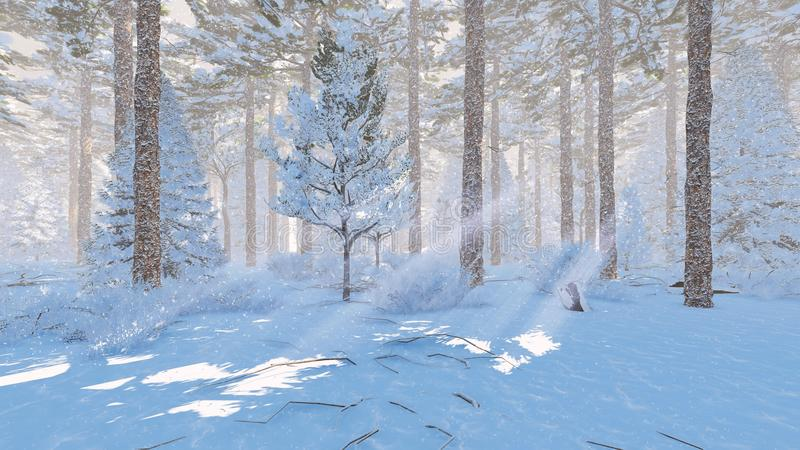 Sunny day in a snowy spruce forest. Winter landscape. Snow-covered pine forest at snowfall sunny day. Realistic 3D illustration was done from my own 3D rendering vector illustration