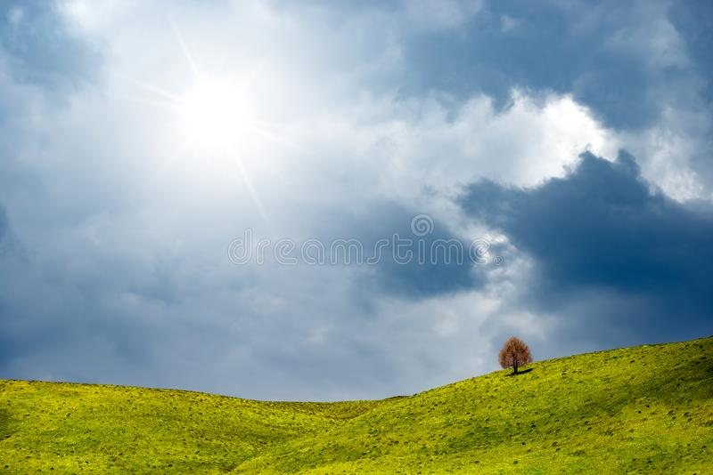 Sunny day in spring with hill covered by grass and tree. Idyllic countryside landscape view, lonely tree among green fields, blue royalty free stock photos