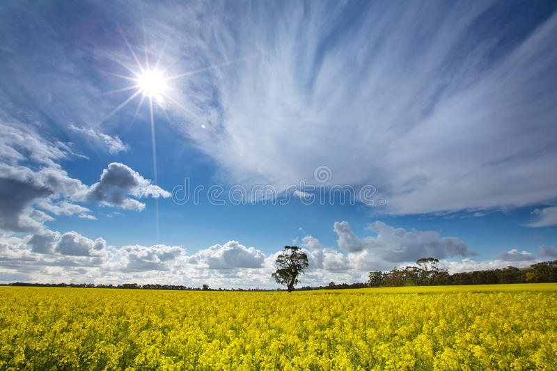 Sunny day stock photography