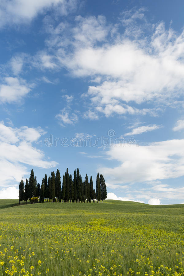 Download Sunny day in Tuscany stock photo. Image of tranquil, cypress - 25154100