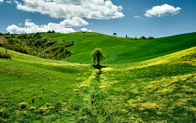 Sunny day in Tuscany green hills. landscape view. Tuscany, Italy, Europe royalty free stock images