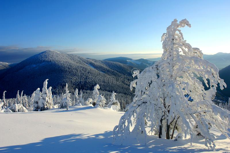 Sunny day in the winter mountains stock images