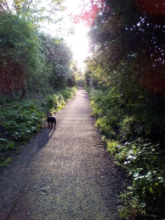 Sunny Days Stroll Again imagen de archivo libre de regalías