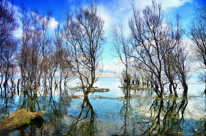 Sunny days under natural scenery, lakes, trees. In China stock photography
