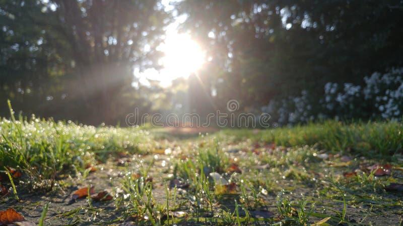 Sunny Dew fotos de archivo
