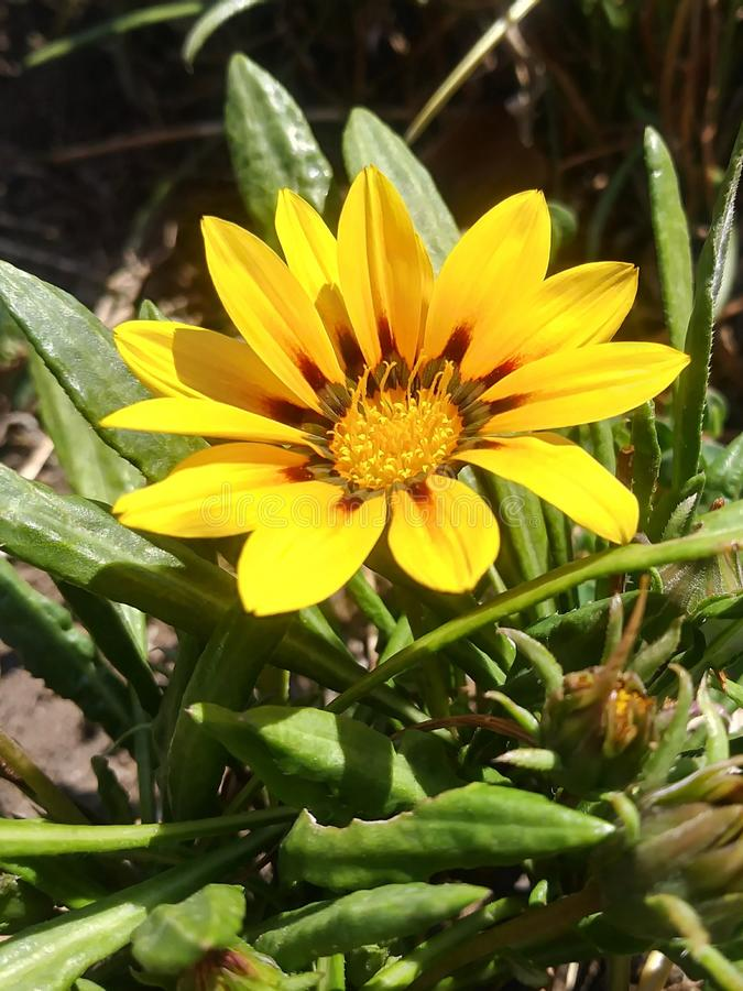 A sunny disposition. Flowers from gardens royalty free stock photography