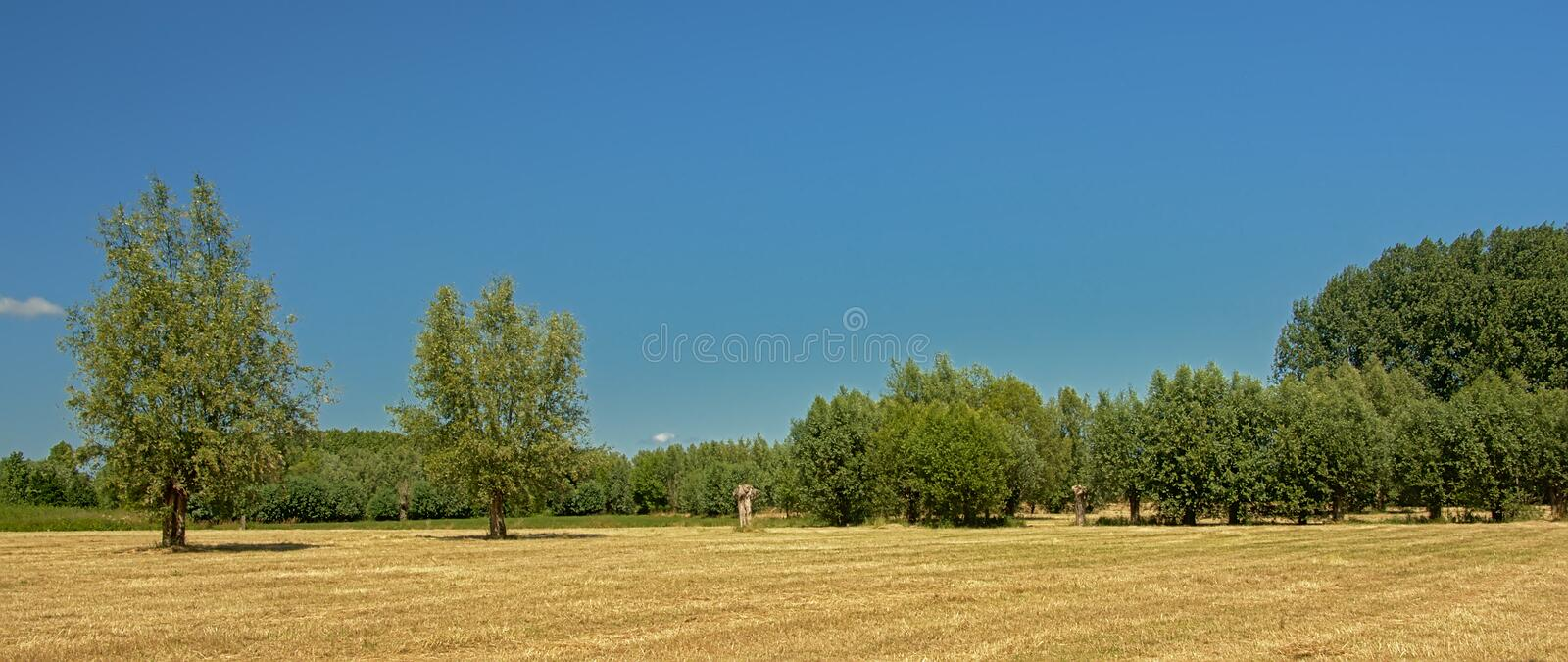 Sunny dry farm land with trees under a clear blue sky in Kalkense Meersen nature reserve, Flanders, Belgium. Part of the Sigmaplan which protects Flanders from royalty free stock photos
