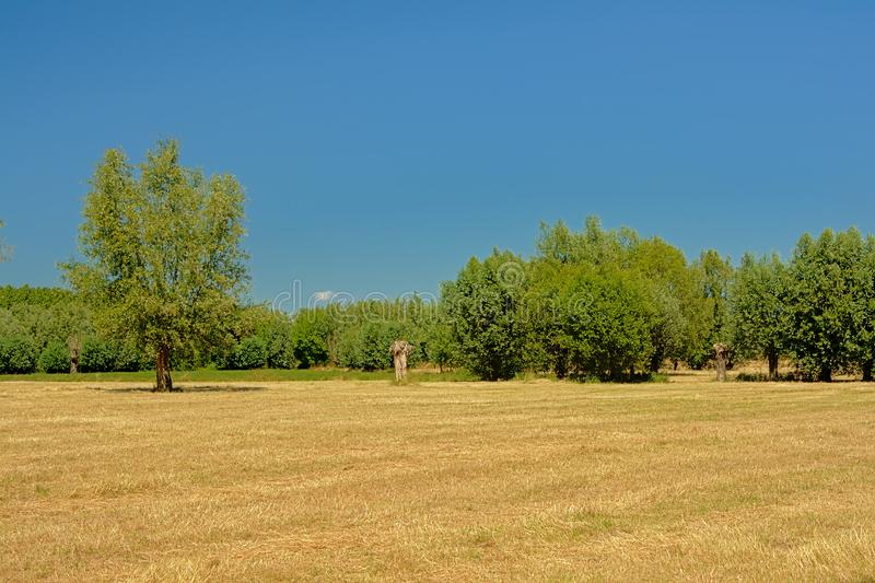 Sunny dry farmland with trees under a clear blue sky in Kalkense Meersen nature reserve, Flanders, Belgium. Part of the Sigmaplan which protects Flanders from stock image