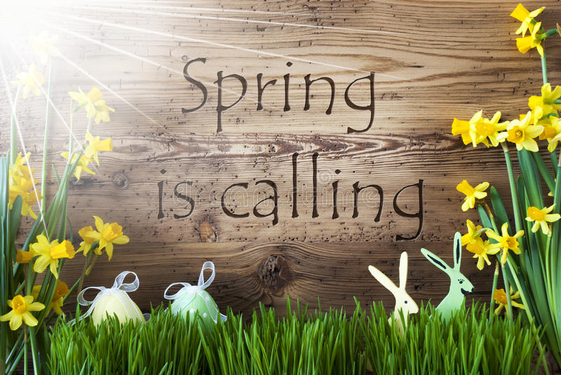 Sunny Easter Decoration, Gras, Text Spring Is Calling royalty free stock images