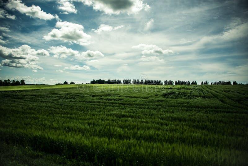 Sunny field stock photo