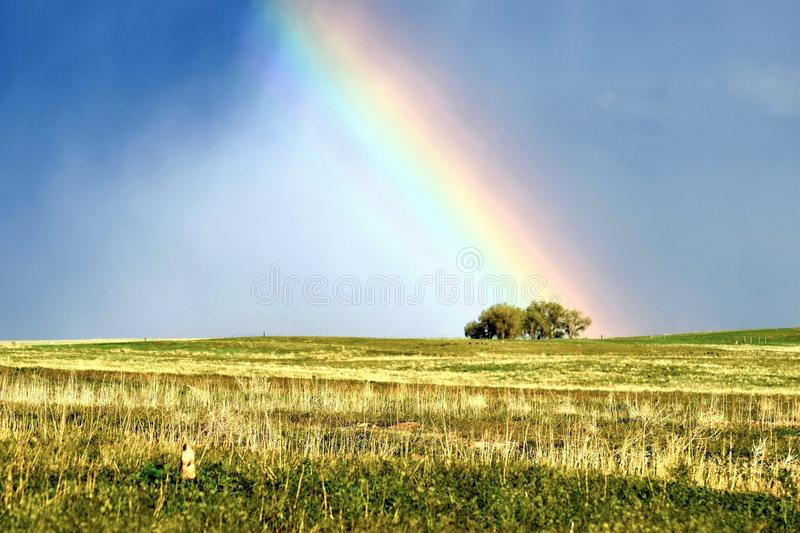 Sunny field with rainbow leading down to tree and a prairie dog in the field royalty free stock photo