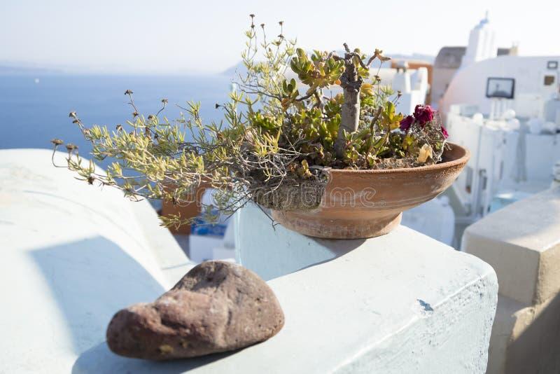 Sunny flower pot at oia, santorini, greece. Holiday feeling with sunny flower pot at oia, santorini, greece royalty free stock photos