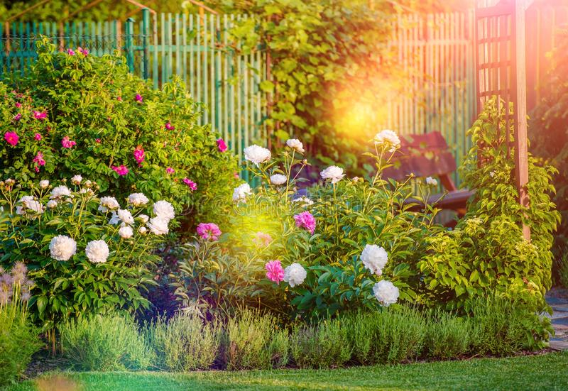 Sunny Flowering Garden arkivbilder