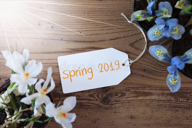 Sunny Flowers etikett, textvår 2019, träbakgrund royaltyfri foto