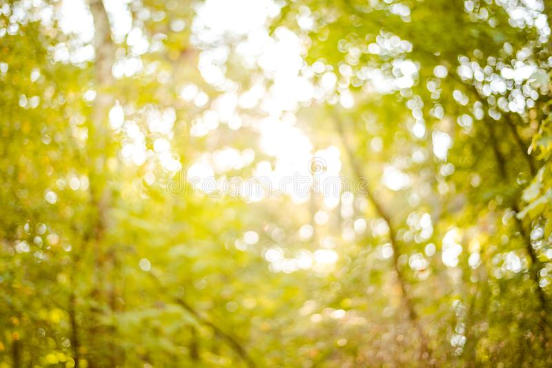 Sunny forest - bright rays of sun and green leaves. Summer stock photo