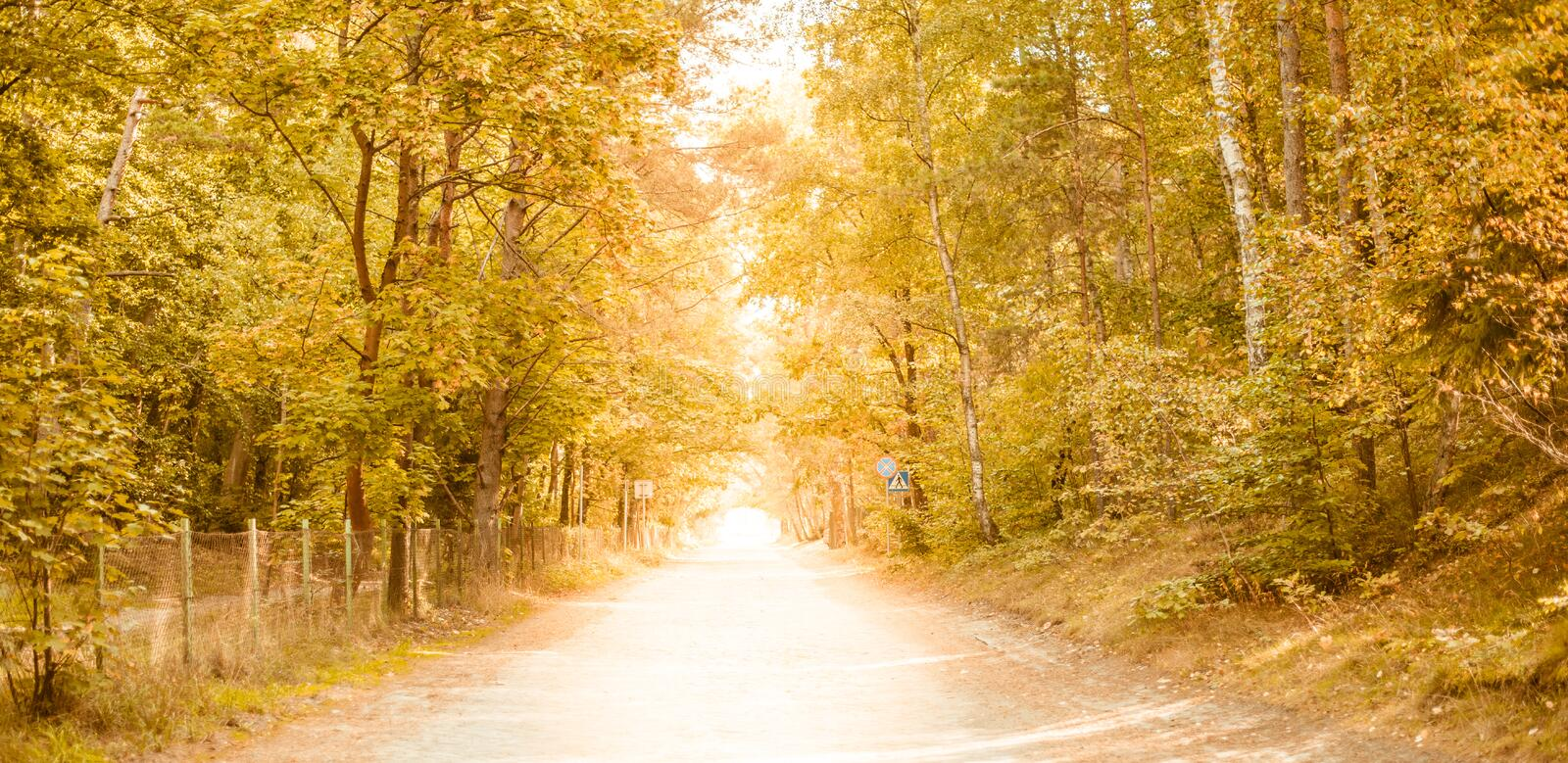 Sunny forest - bright rays of sun and green leaves. Summer royalty free stock photography