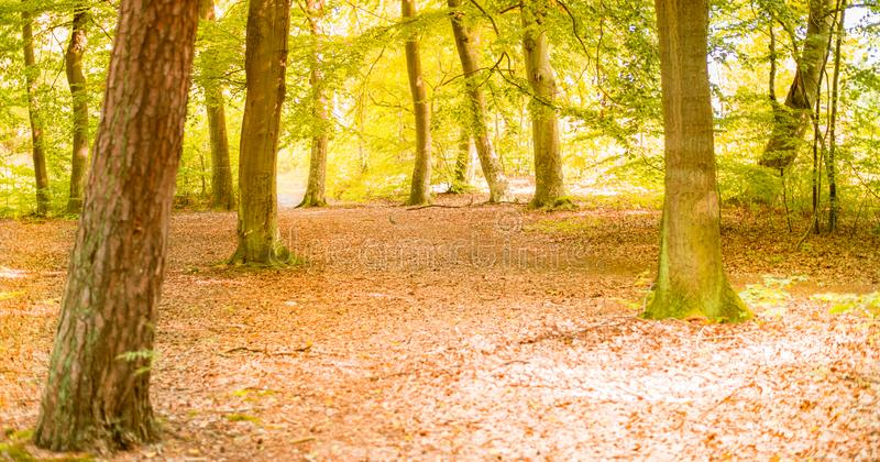 Sunny forest - bright rays of sun and green leaves. Summer season stock photo