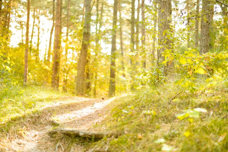 Sunny forest - bright rays of sun and green leaves. Summer stock images