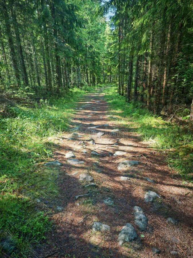 Sunny forest path. In Finland surrounded by green lush trees royalty free stock photos