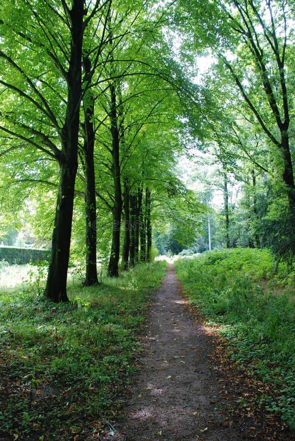 Sunny Forest Path Free Public Domain Cc0 Image