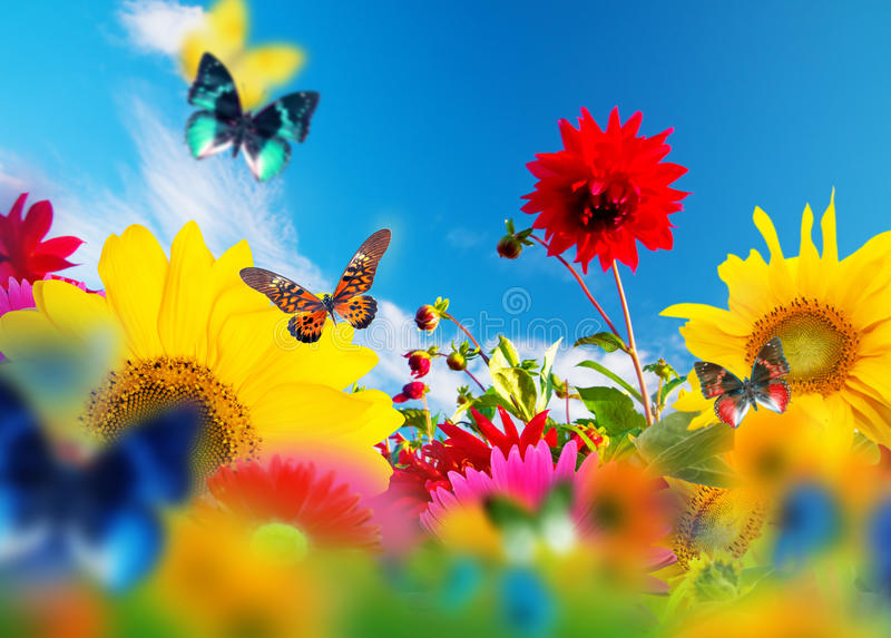 Sunny garden of flowers and butterflies royalty free stock photo