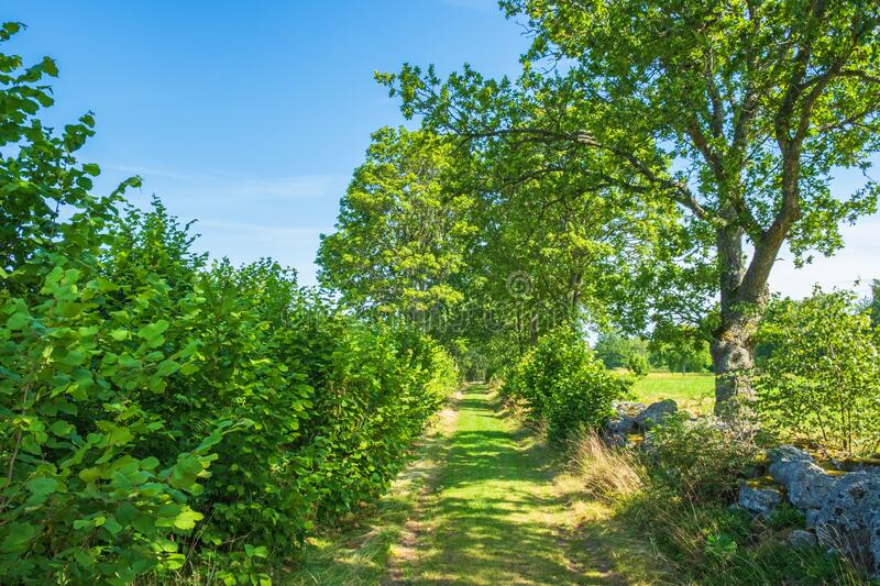 Sunny grass road with lush trees in the countryside stock photo