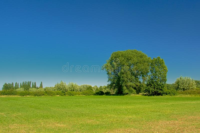 Sunny green farmland with trees under a clear blue sky in Kalkense Meersen nature reserve, Flanders, Belgium. Sunny green farm land with trees under a clear stock photo