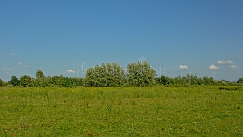 Sunny green field with trees in Kalkense Meersen nature reserve, Flanders, Belgium. Part of the Sigmaplan which protects Flanders from flooding. In extreme stock images