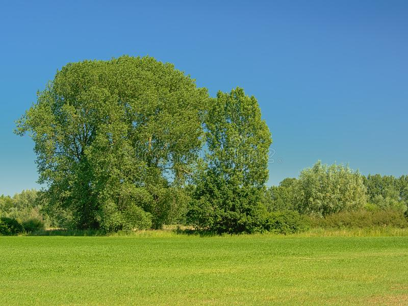 Sunny green meadow with trees under a clear blue sky in Kalkense Meersen nature reserve, Flanders, Belgium. Sunny green field with trees under a clear blue sky stock photos