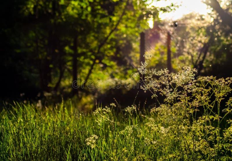 Sunny Green Scene Beautiful-edgsbaston Res stockbilder
