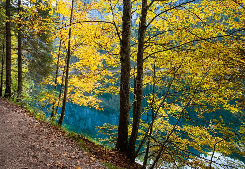 Peaceful autumn Alps mountain lake with clear transparent water and reflections. Gosauseen or Vorderer Gosausee lake, Upper. Sunny idyllic colorful autumn alpine royalty free stock images