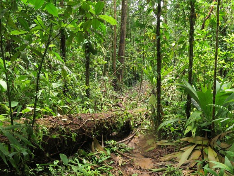 Sunny Jungle tropisk rainforest i Central America royaltyfria bilder